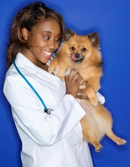Your Pet's Teeth - Getting Your Pet Proper Affordable Dental Care