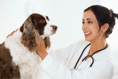 Affordable Dental Care For Dogs With Dental Disease